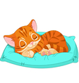 Sleeping kitten vector image