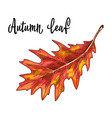 autumn yellow orange oak leaf isolated on white vector image vector image