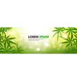 medical marijuana leaves cannabis therapy vector image