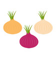 onion ripe bulb set with green sprout icon red vector image
