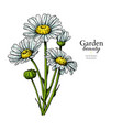 daisy flower drawing hand drawn floral vector image vector image