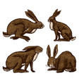 wild hares rabbits are sitting and jumping vector image