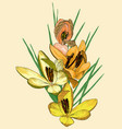 yellow crocus flowers vector image