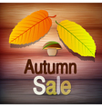 Autumn Sale theme vector image vector image
