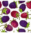 boysenberry berries pattern on white vector image vector image
