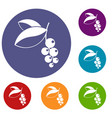 currant berries icons set vector image vector image
