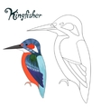 Educational game coloring book kingfisher bird vector image
