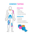 kinesiology taping reduses and improves vector image vector image