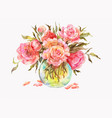 pink roses or peonies in a glass vase watercolor vector image vector image