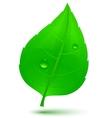 spring green leaf vector image vector image