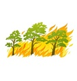 Burning forest trees in fire