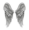 hand drawn wings vector image vector image