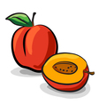 Peach fruits sketch drawing vector image