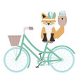 cute fox and owl with feathers hat in bicycle vector image vector image
