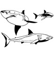 Great White Shark Set vector image vector image
