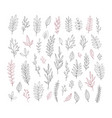 hand drawn vintage botanical collection vector image vector image