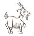monochrome cute cartoon goat with bell isolated vector image