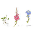 wild plants and flowers hand drawn in color vector image vector image