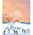 antarctic penguins at dawn