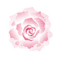 hand drawn decorative rose vector image