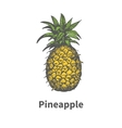 hand-drawn single yellow ripe pineapple vector image