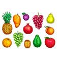 isolated icons of exotic garden fruits vector image