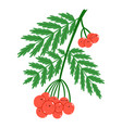 red rowan berries cute characters vector image