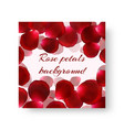 pattern of brochure with rose petals vector image vector image