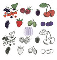 berries collection hand drawn set of berries in vector image