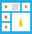 flat icon leaves set of linden hickory maple and vector image vector image