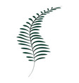 rustic exotic branch plant with leaves vector image vector image