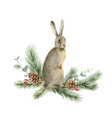 watercolor christmas card with a hare vector image vector image