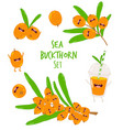 sea buckthorn smoothies vector image vector image