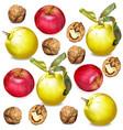 autumn apple walnuts and quince pattern vector image
