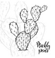 hand drawn opuntia ficus-indica vector image