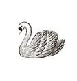 swans sketch hand drawn vector image vector image
