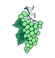 Abstract bunch of grapes vector image