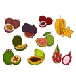 Fresh tropical fruits sketch icons vector image vector image