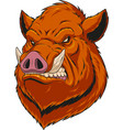 head ferocious boar vector image