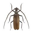 Large Brown Beetle Realistic vector image