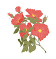 embroidery wild roses dogrose flowers classic vector image