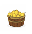 Quince fruits in a wooden basket vector image vector image
