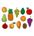 Sketch of fresh organic fruits vector image vector image