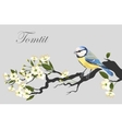 Tomtit on the cherry branch vector image vector image
