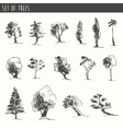 Trees sketch set vintage style hand drawn vector image vector image