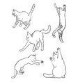cat line on a white background 01 vector image