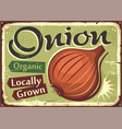 onion locally grown organic farm product vector image vector image