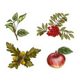 set of autumn fruits and leaves isolated on white vector image vector image
