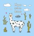 cute alpaca llamas or wild guanaco on the vector image vector image