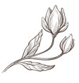 flower with leaves and blooming botanical plant vector image